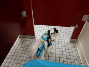 Hestia in a bathroom stall