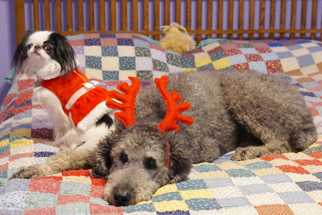 Another with Ollie wearing reindeer antlers and Hestia a lice closer to the camera. If you look closely you can see my favorite stuffie Bun-Lamb in the background on the bed.