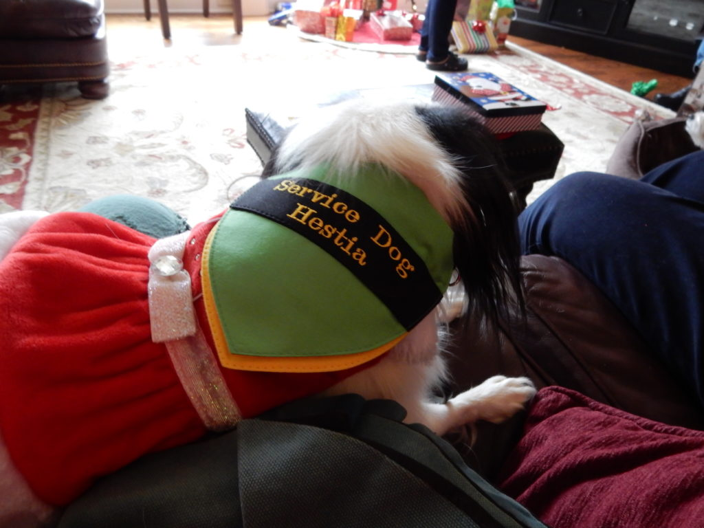 "This is the outside of Hestia's new bandana.  It says ""Service Dog Hestia"" on black ribbon across a green bandana.  You can see a yellow layer peeking through underneath."