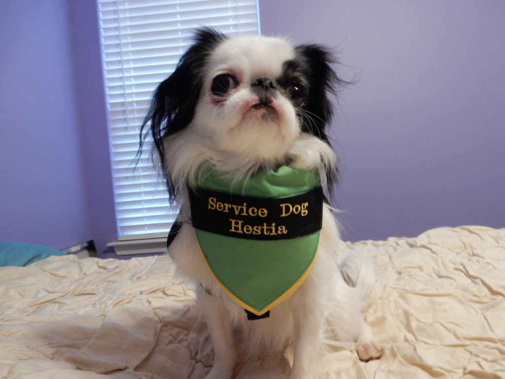 Another shot of Hestia's new bandana, this time from the front.