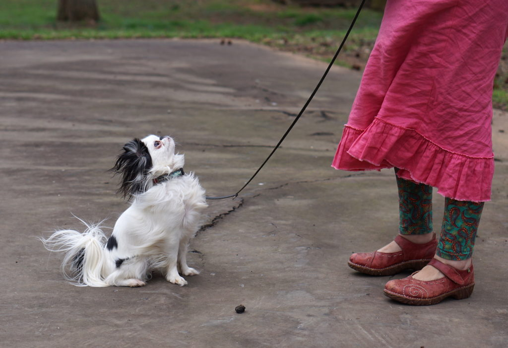 Hestia (small black and white dog) sitting with wind blown hair, looking at Veronica who is wearing a pink skirt and green and orange leggings and red shoes.