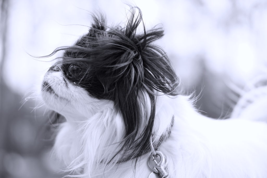 Closeup of Hestia in black and white with her hair blowing around her head.