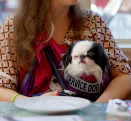 A small black and white dog with her eyes closed in a rainbow pouch. There is a reflective service dog patch on the pouch, and you can see Veronica's curly hair and 70s shirt in the background.