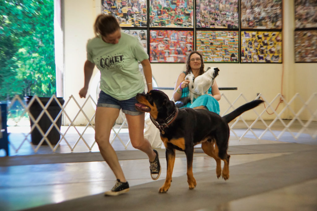 Rottie and owner run together across the room after a sit stay