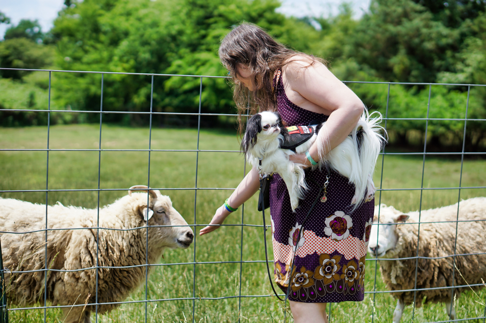 Veronica leans over to pet a sheep.  Hestia is in Veronica's arms and looking away from the sheep.