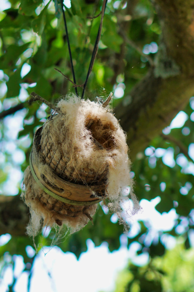 A birds nest made out of sheep fur so it looks like a sheep, with twigs sticking out like horns.