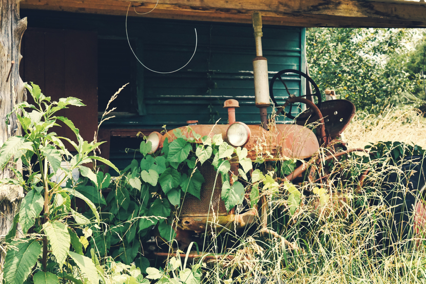 A rusty old tractor in a falling down barn.  The tractor has ivy growing on it.