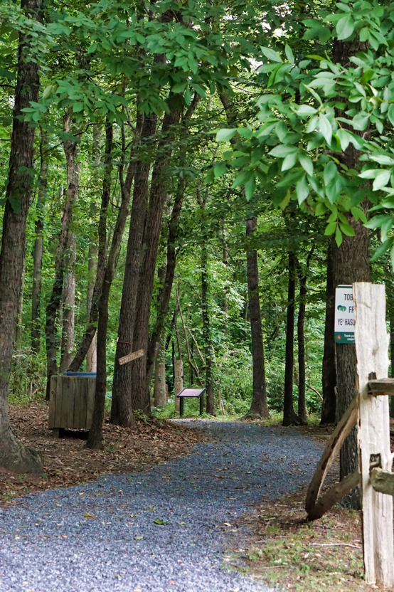 The trail leads off into a quiet verdant forest.