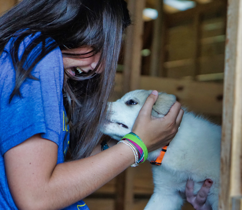 A young girl gleefully pets one of the puppies, who has an orange collar.