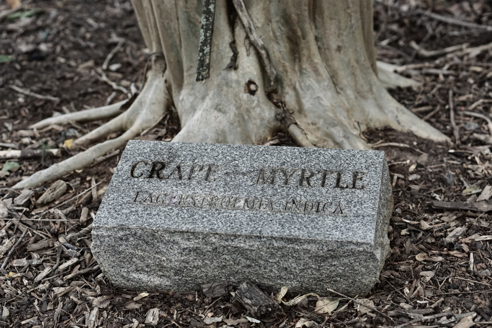 A crepe myrtle trunk with a stone carved with the name in front of the tree.