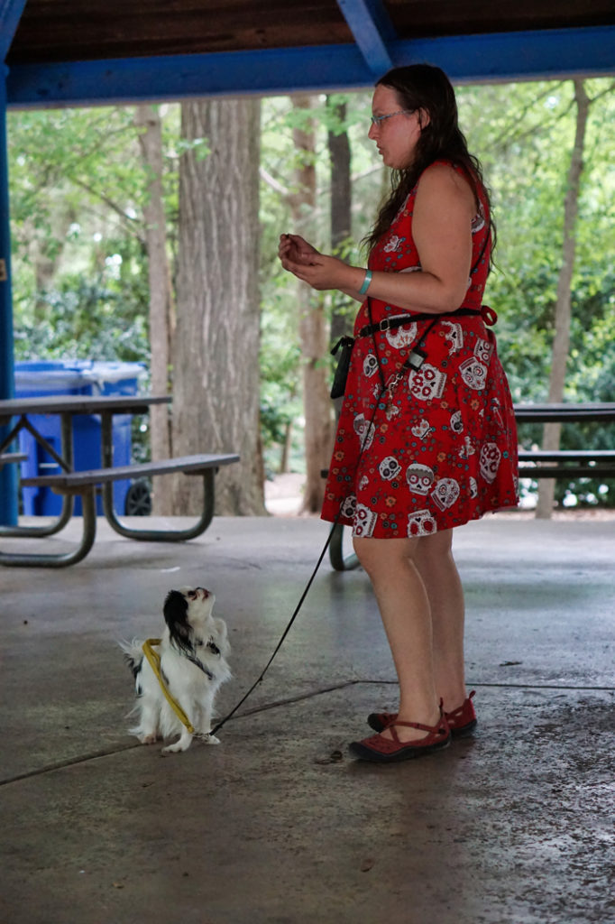 "Veronica demonstrates ""find it"" with Hestia in the picnic shelter."
