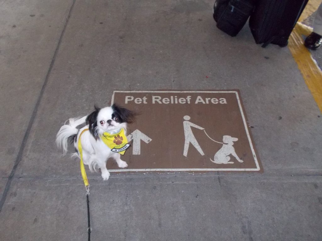 The unnamed airport's signage to the outdoor SARA was great for sighted people.  Hestia sits next to a sign on the ground leading to the pet relief area with an arrow of which direction to go.