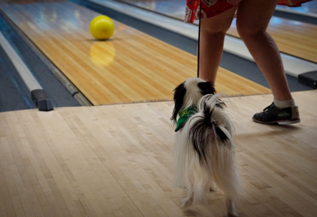 Hestia stands on the floor in a bowling alley, next to Veronica's legs.  In front of them, a yellow bowling ball rolls down the lane.