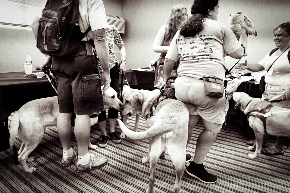 A black and white photo from the BarkaLounge.  This photo shows four yellow labs all in a mush while their owners check out dog toys!
