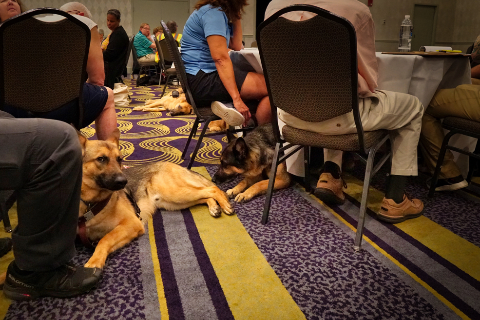 "Two German Shepherd Dogs on the floor next to each other.  One appears to sniff the tail of the other (which is right in the first one's face!) and the sniffed dog looks at the camera as if saying ""I know what that other dog is doing!"".  Hilarious!"
