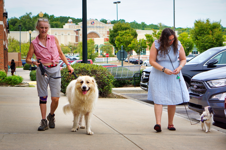 Phyllis with Avalanche and Veronica with Hestia walk to Panera.  Hestia is doing a perfect hands free heel.