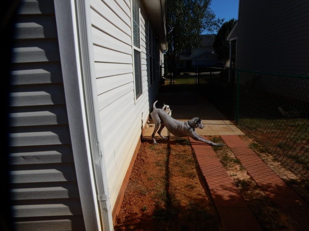 A look down the side of our house with Ollie stretching and Hestia in the background.
