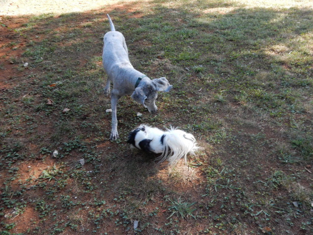 Another shot of Ollie and Hestia playing.