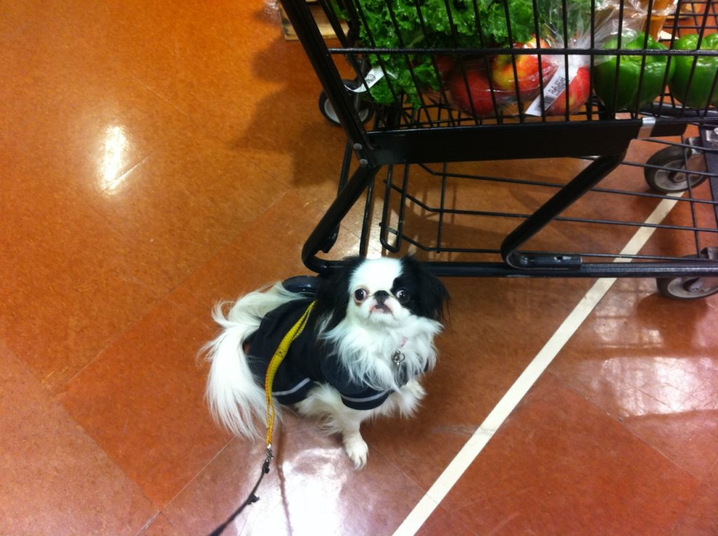 Hestia in a black raincoat next to a full shopping cart