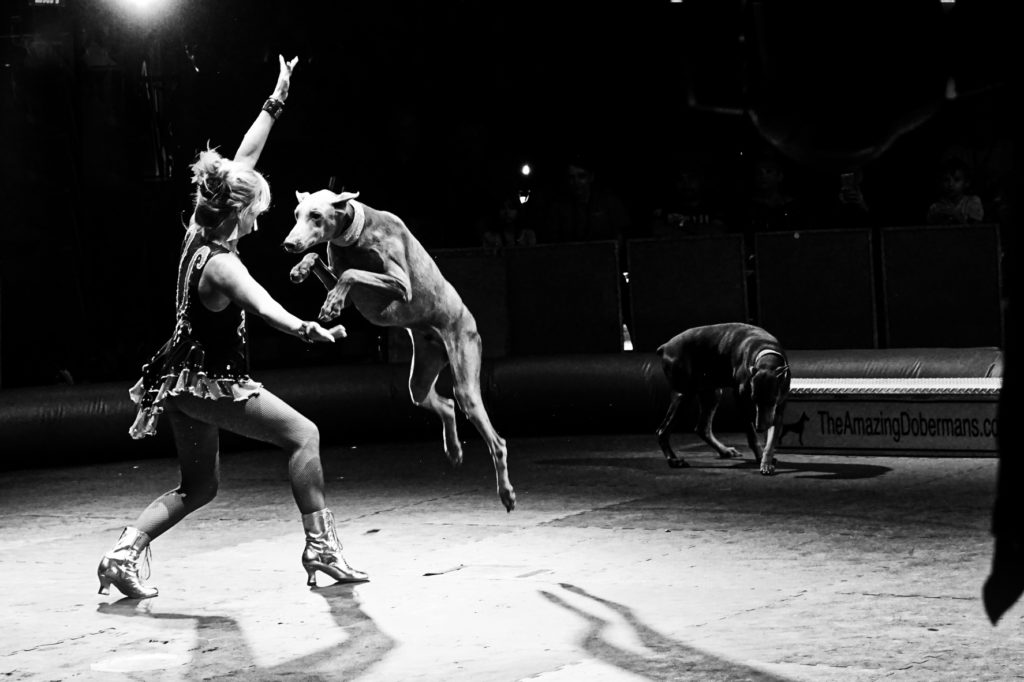 A black and white picture of the woman holding her arm out and a Dobie jumping over her arm.