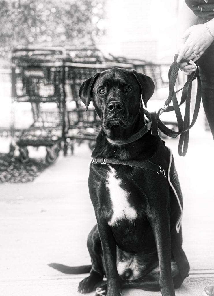 A black and white picture of Jax looking at the camera.