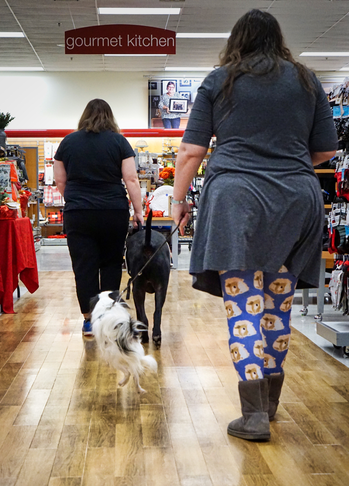 Kristi and Jax walk though the store with Veronica and Hestia following.  Hestia is in the middle of a loop command and has all four legs off the ground!