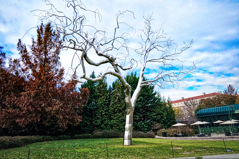 A 40-foot, realistic sculpture of a silver tree, with the bright blue sky showing through in the background.