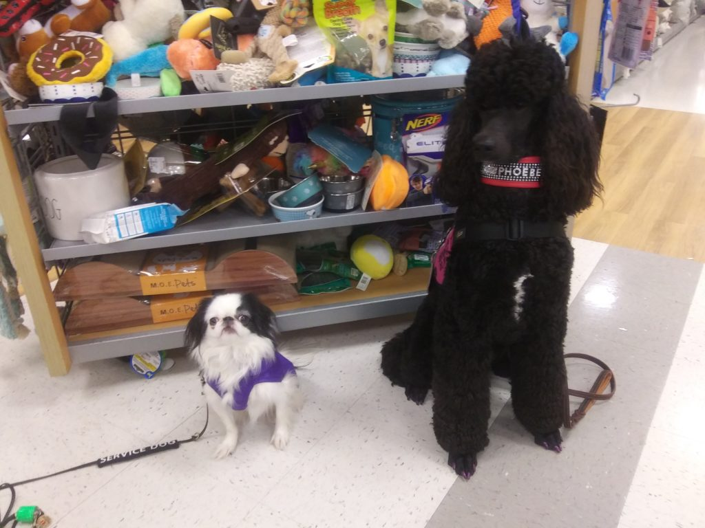 Closeup of Hestia and Phoebe in front of the dog toys.
