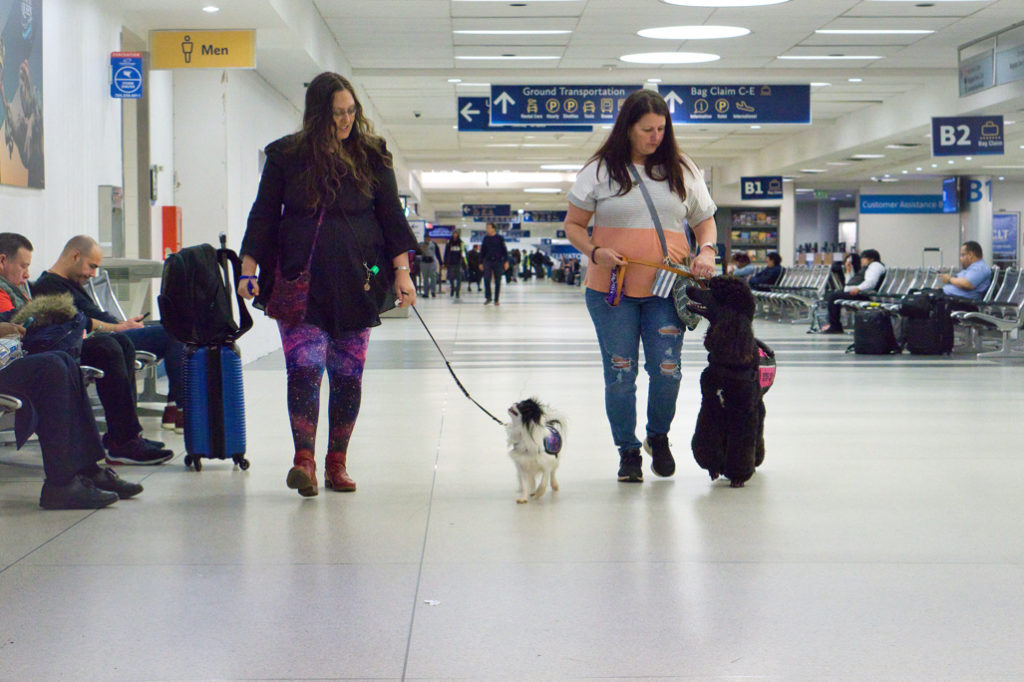 Walking through baggage claim, both Hestia and Phoebe only have eyes for their humans.