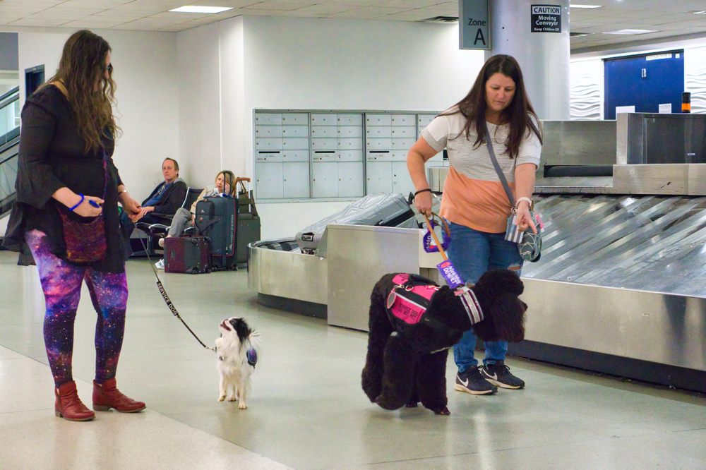 Phoebe investigates a moving baggage claim apparatus, while Hestia watches Veronica.