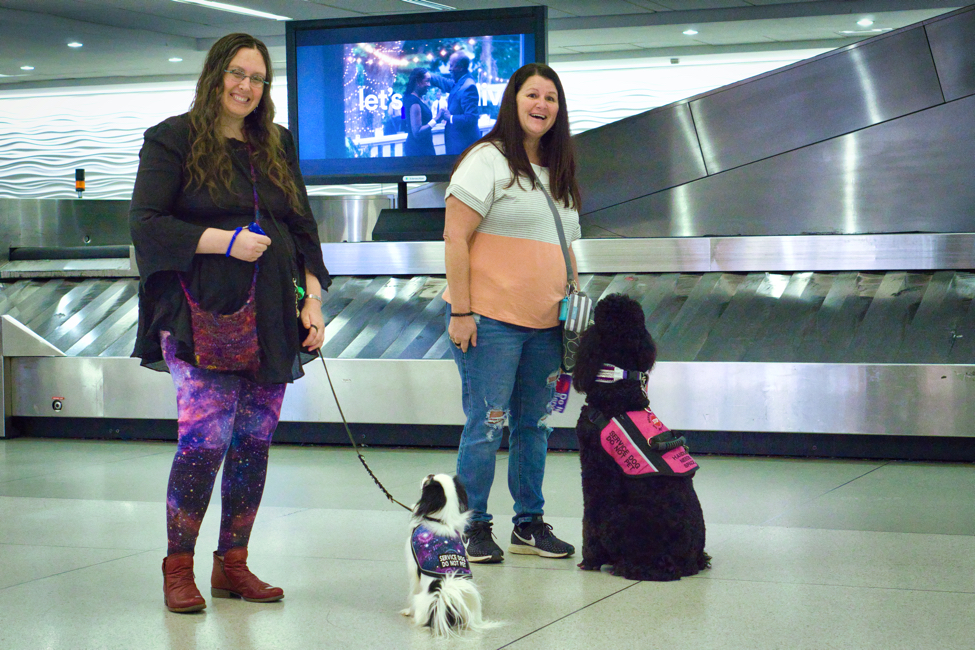 After a bit of training, Phoebe is calm as a cucumber around baggage claim.  Veronica and Tammy smile at the camera, while Hestia and Phoebe smile at their humans!