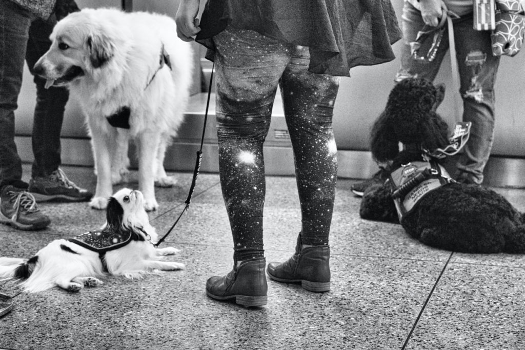 Black and white photo of the dogs hanging out while at the check-in desk.