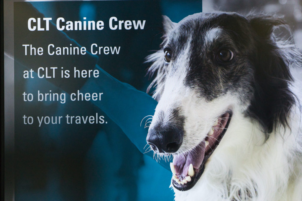 "Another similar sign with a Borzoi says ""CLT canine crew.  The canine crew at CLT is here to bring cheer to your travels."""