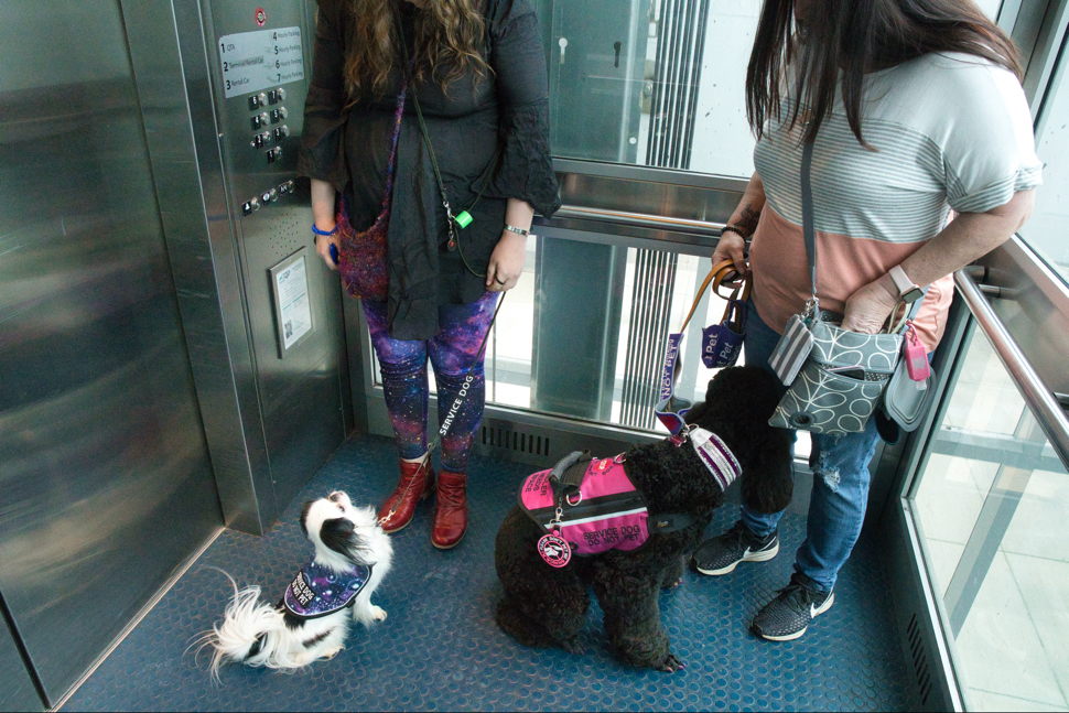 Hestia and Phoebe handle the glass elevator very well.  Hestia is looking at Veronica, and Phoebe is watching out the glass sides in wonder.