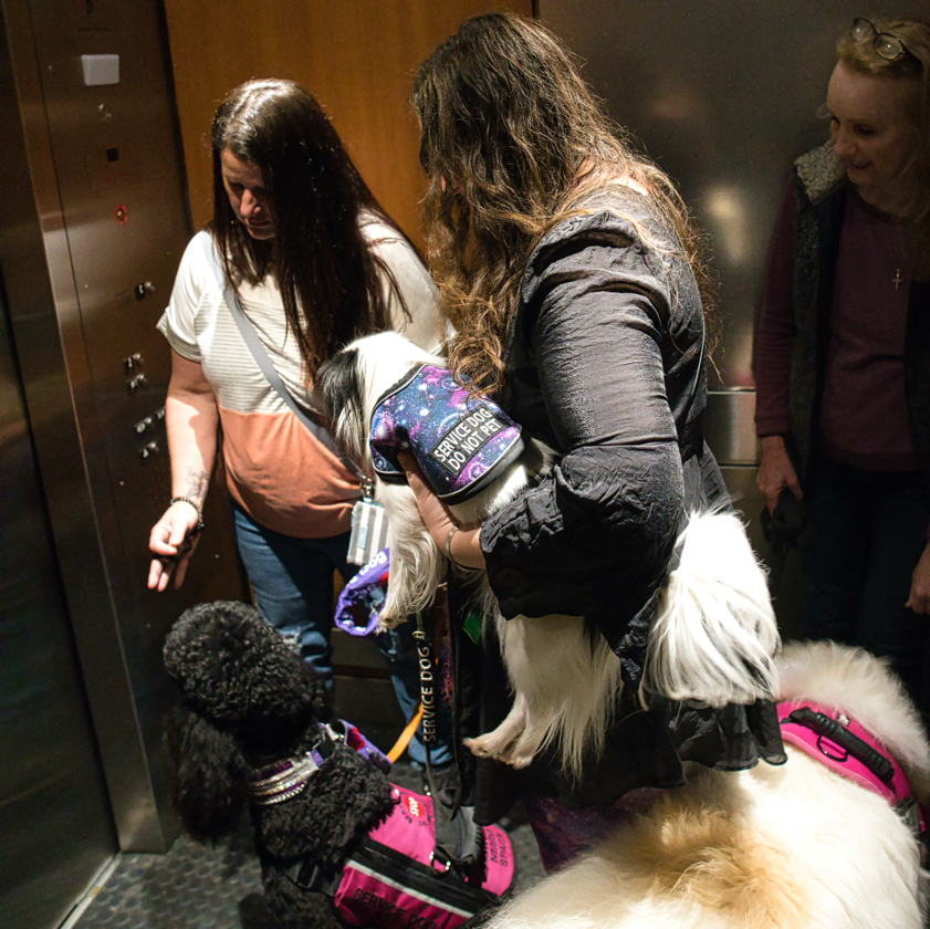 It's crowded in the elevator with all three dogs!  Hestia is being carried, and Avalanche and Phoebe are crammed into the elevator.