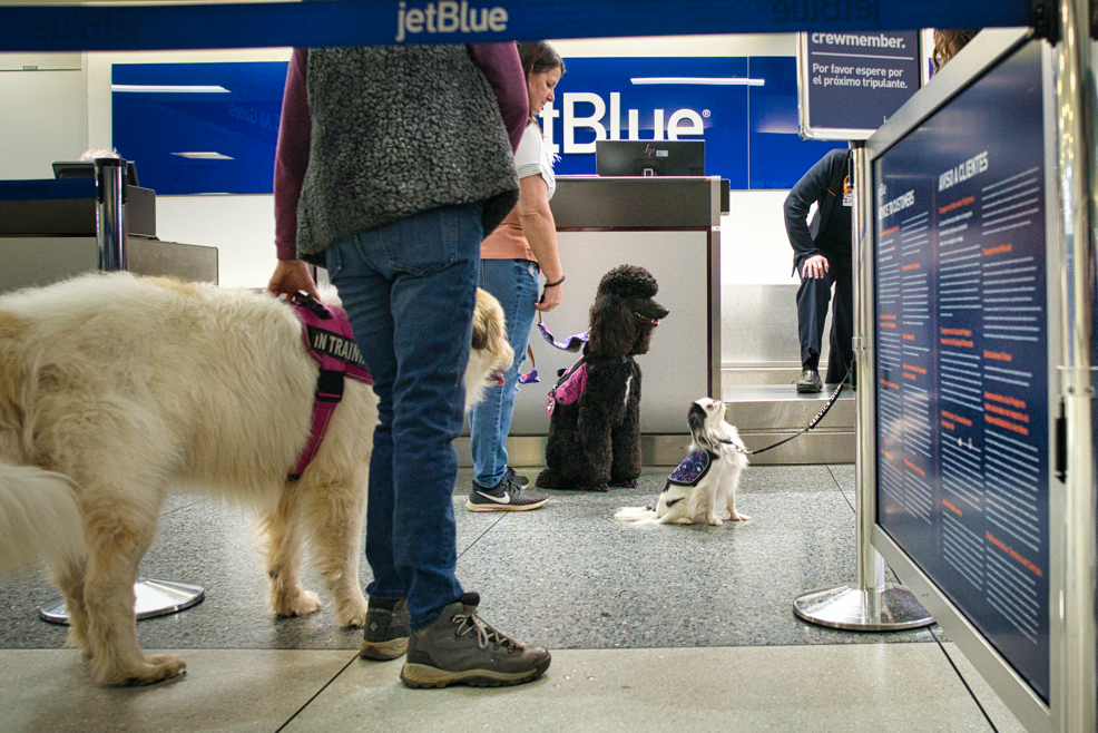 The three dogs stand around in the check in area.