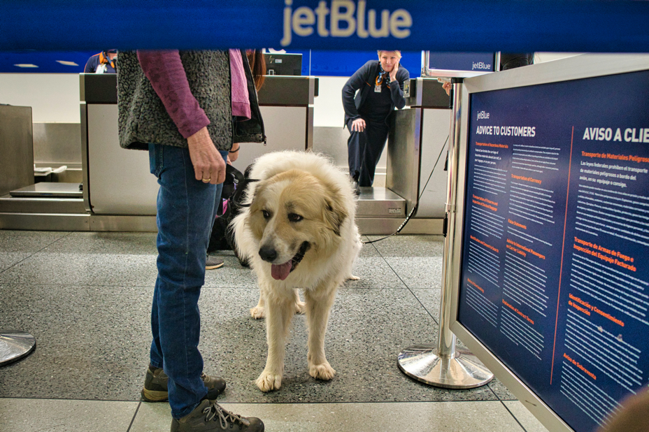 Avalanche is seen underneath a JetBlue logo with a check-in person leaning over in the background looking on happily.