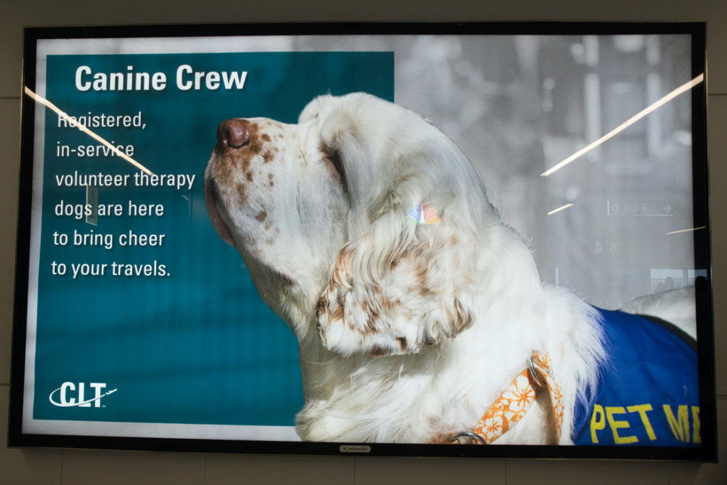 "One reason for all the requests to pet-- a giant sign with a picture of a Clumber Spaniel on it.  The sign says ""Canine crew.  Registered, in-service volunteer therapy dogs are here to bring cheer to your travels."""