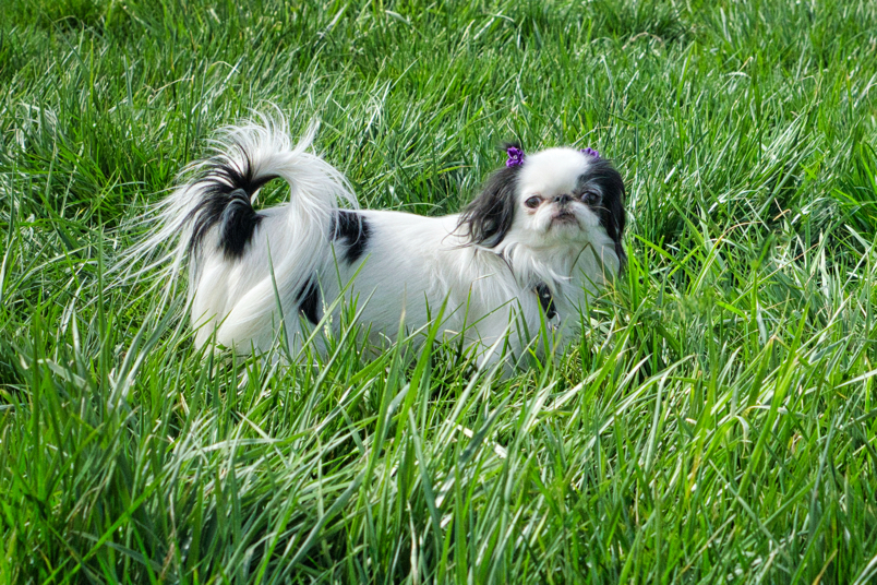 Hestia poses in the grass.