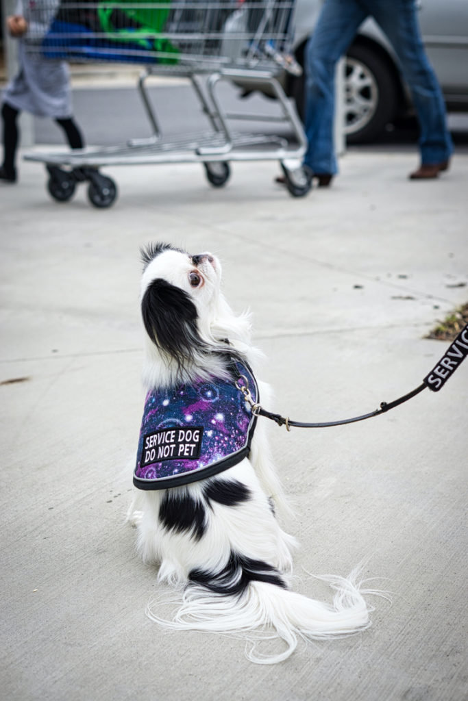 """Hestia's back is to the camera, and she looks up and to the right at Veronica (off camera) as someone walks a cart by in the background.  You can see her galaxy vest with """"service dog do not pet"""" on the back."""