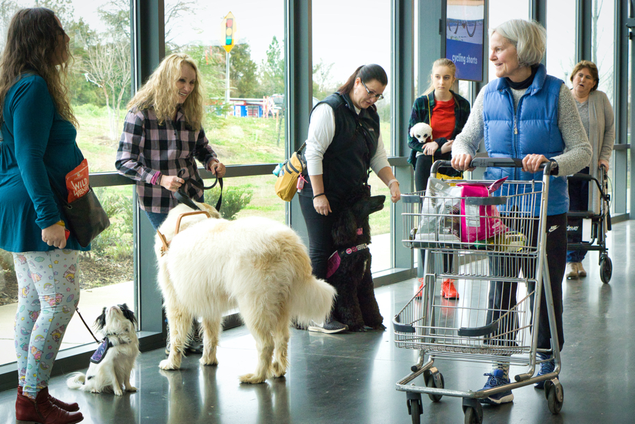 A woman pushes a shopping cart past all the puppers.