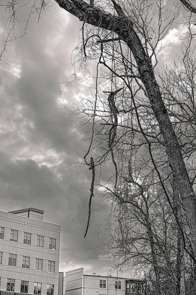 Black and white photo with dramatic sky of some trees with fallen branches caught up in each other.