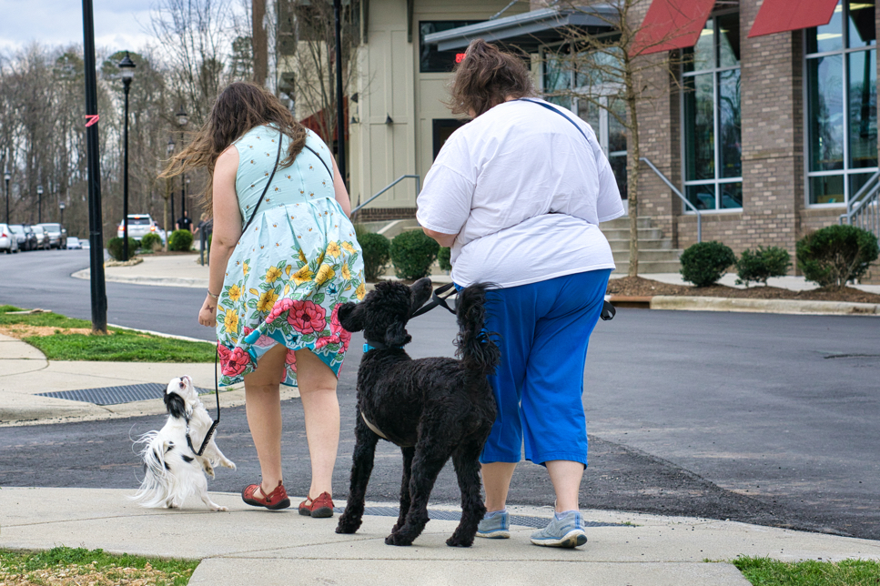 Photo from the rear of Christi with Gabby and Veronica with Hestia training and walking along the sidewalk.  Gabby is mid-head-turn and her ears are flying just like Ollie's ears used to!