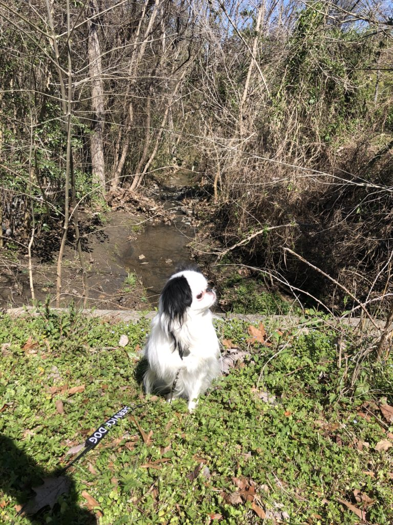 Hestia poses in front of the creek on the other side after it passes under the road.