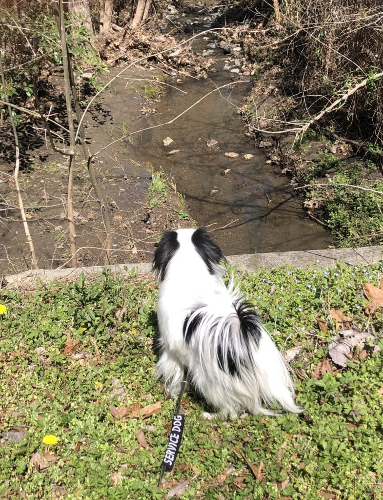 You can see Hestia from the back as she looks for whatever made that sound in the creek!