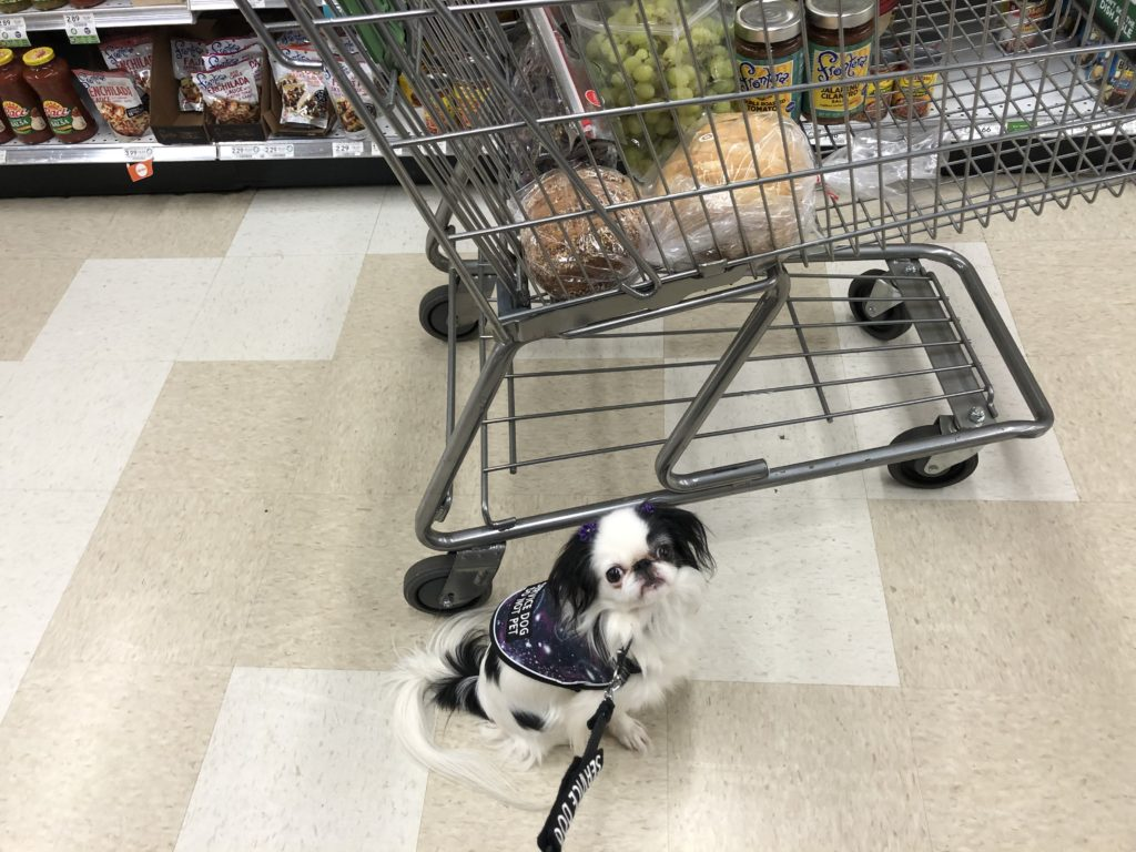 Hestia sits in front of the grocery cart filled with bread, fresh fruits and veggies, and salsa.