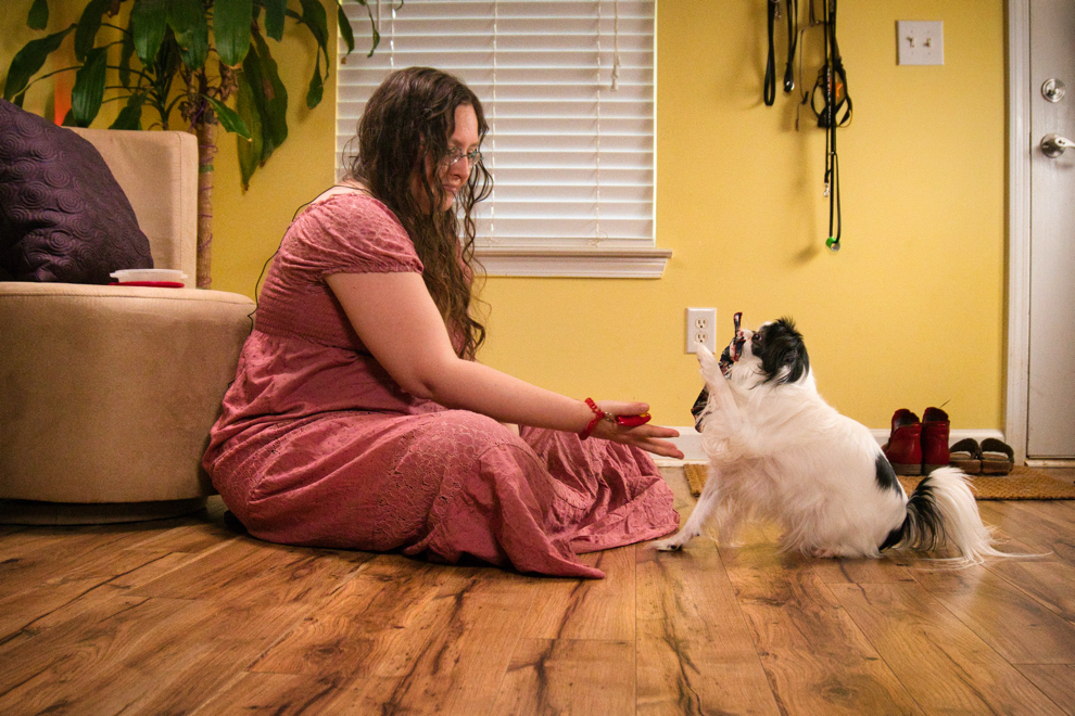 Veronica is a woman with long brown curly hair, sitting on the floor in a room with yellow walls in front of a grey round chair and a big plant.  She holds out her hand and reaches towards Hestia, a small white and black dog with a smushed face, who is holding a dark blue hankie in her mouth.